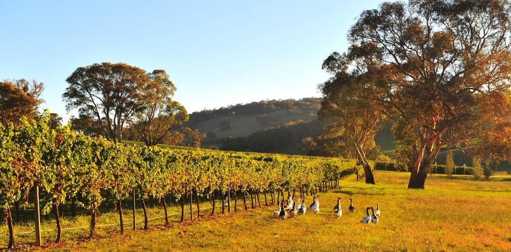 James Halliday Write-Up On Wines From Orange